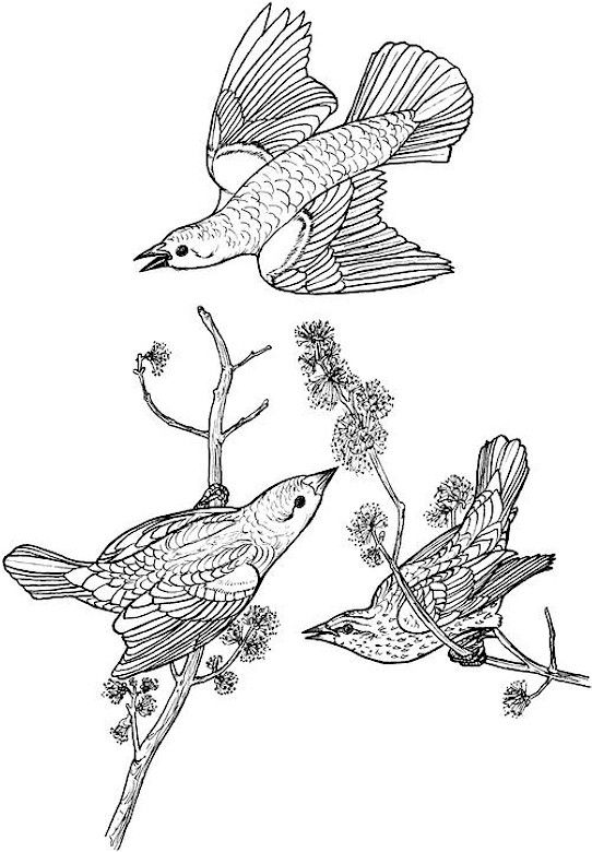 bird coloring page free sample join fb grown up coloring group