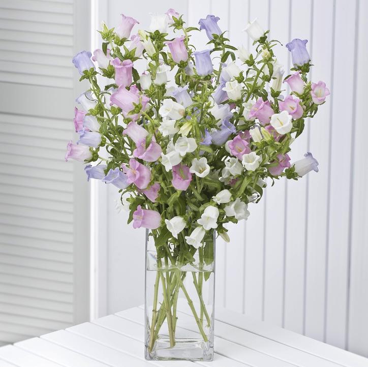 Pin By Rebecca Susan On Fleur In 2020 Flowers By Post Small Flower Arrangements Campanula Flowers