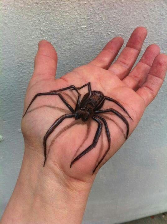 Teresa mullen spider paint - ✯ www.pinterest.com/WhoLoves/Body-Art ✯ #BodyArt