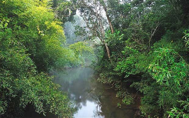 Madagascan Rainforest | Natural wonders of the world | Pinterest ...
