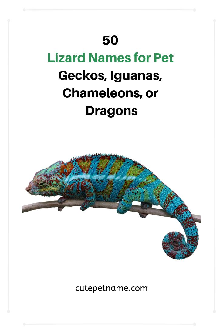 50 Lizard Names For Pet Geckos Iguanas Chameleons Or Dragons Lizard Names Lizard Chameleon Pet