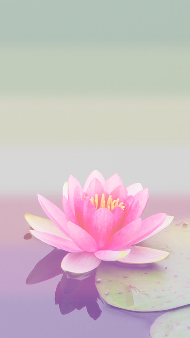 Genderfae Lotus Phone Backgrounds For Anon Flower Art Iphone