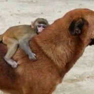 Monkey on a Dog