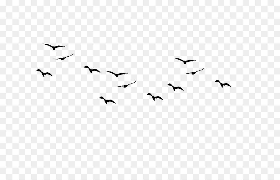 Bird Flight Flock Bird Bird Line Drawing Line Drawing Bird
