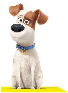 Max Movie Dog Breed : movie, breed, Secret, Movie,, Pets,