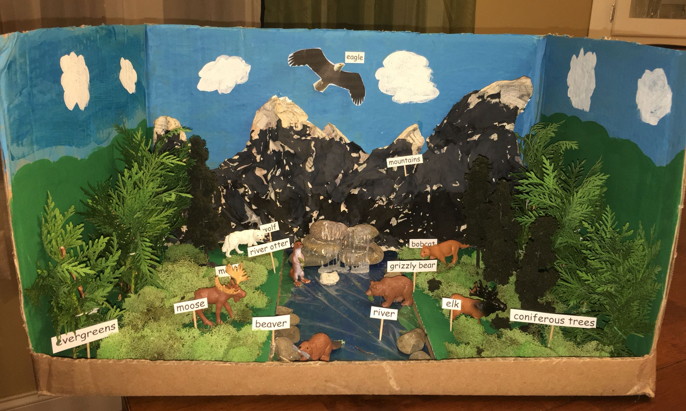 Taiga Biome School Project