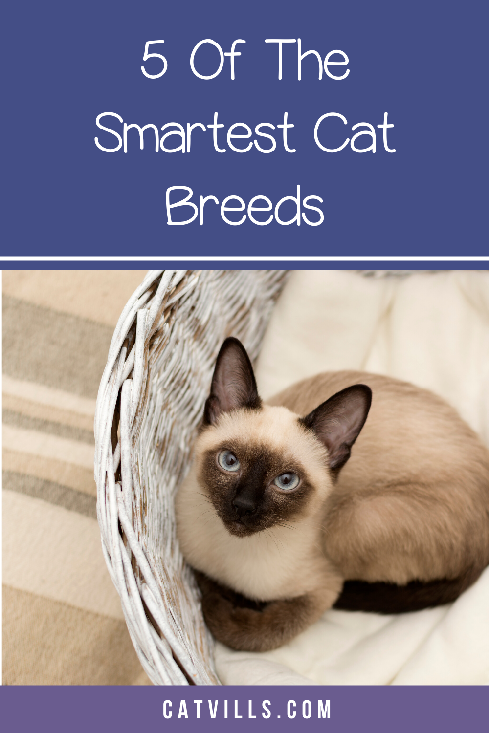 5 of the Most Intelligent Cat Breeds in the World