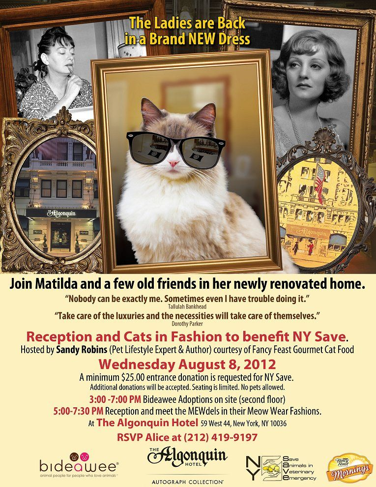 Please Share This Event Aug 8 2012 Matilda The Algonquin Cat Is Participating In A Great Adoption Event For Rescue Cats Cat Vs Dog Pampered Dogs Cat Adoption