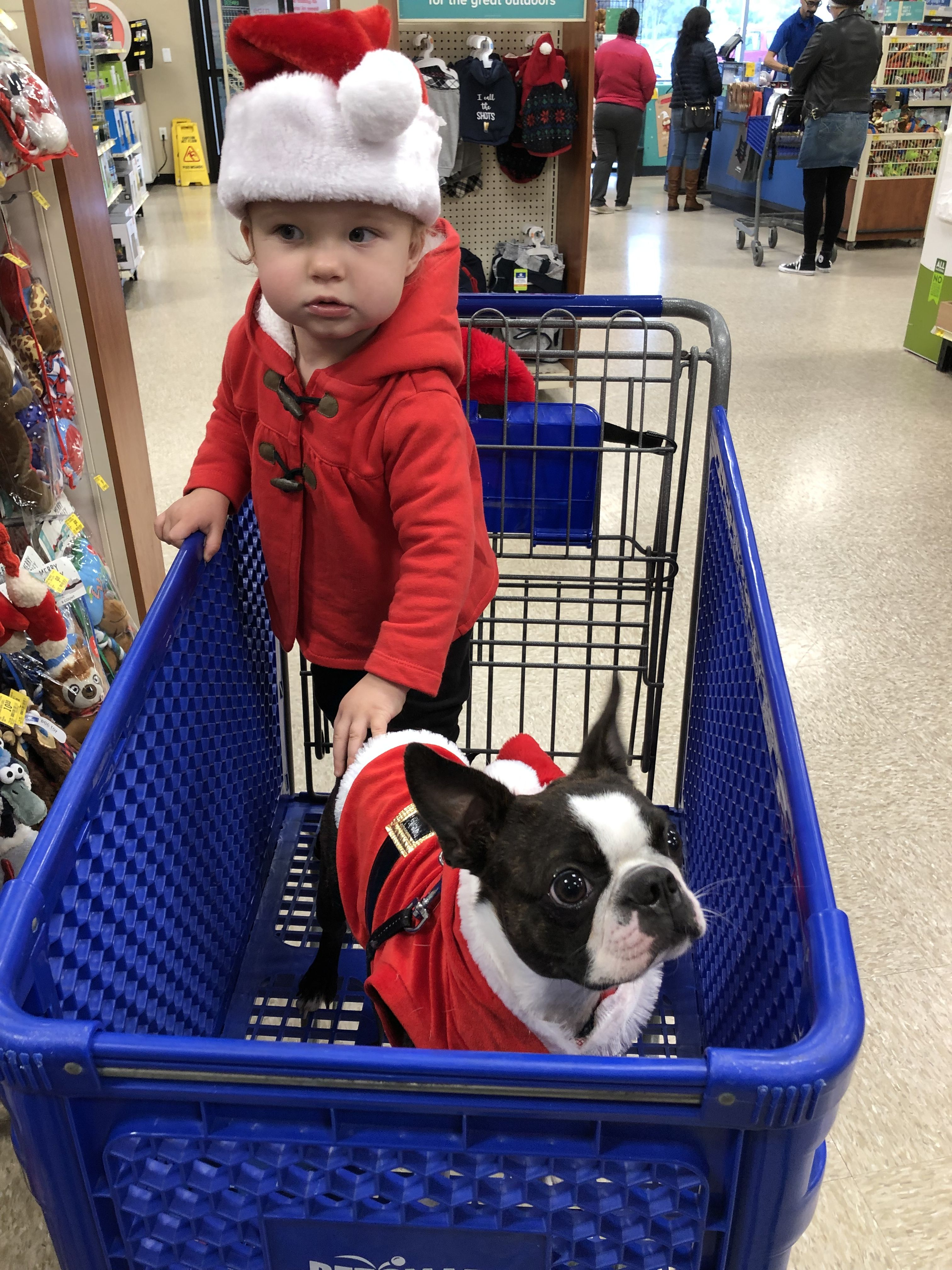 Shopping At Petsmart Boston Terrier Dog Boston Terrier Love Boston Terrier