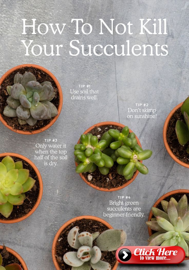 How Not to Kill Your Succulent Succulents, Succulent