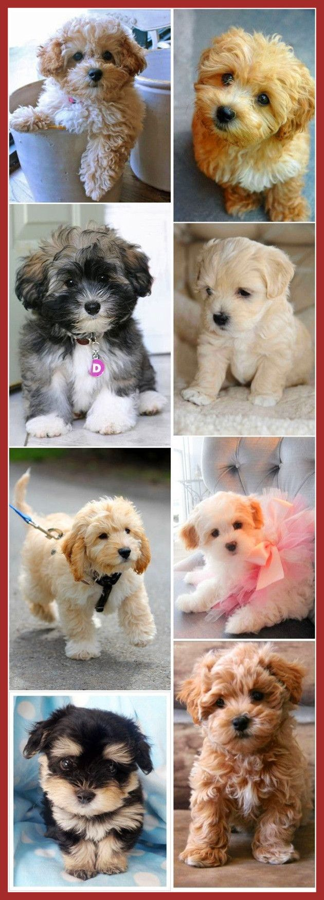 Fascinating top cutest small dog breeds havanese and of cute puppy