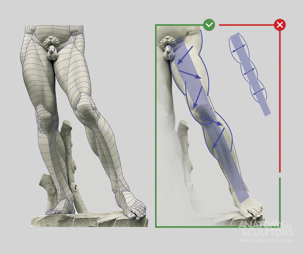 Pin by Mike M. on Tutorials | Pinterest | Anatomy, Menu and Legs
