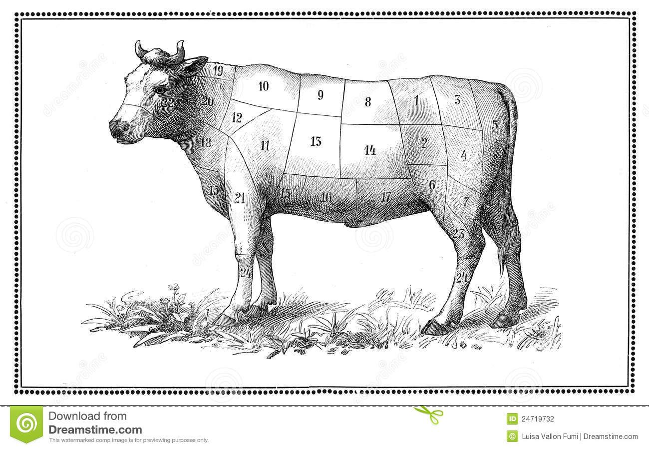 An old beef chart with numbered cuts by luisa vallon fumi an old beef chart with numbered cuts by luisa vallon fumi pooptronica