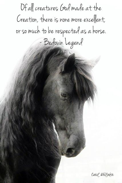 008 INSPIRATIONAL HORSE QUOTES Horses, Horse quotes