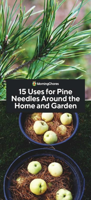 15 Uses For Pine Needles Around The Home And Garden In 2020 Pine Needles Medicinal Herbs Mulching