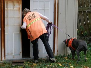 Seattle Pet Detectives Via Missing Pet Partnership For Lost Dogs And Cats Losing A Pet Seattle Dog Detection Dogs