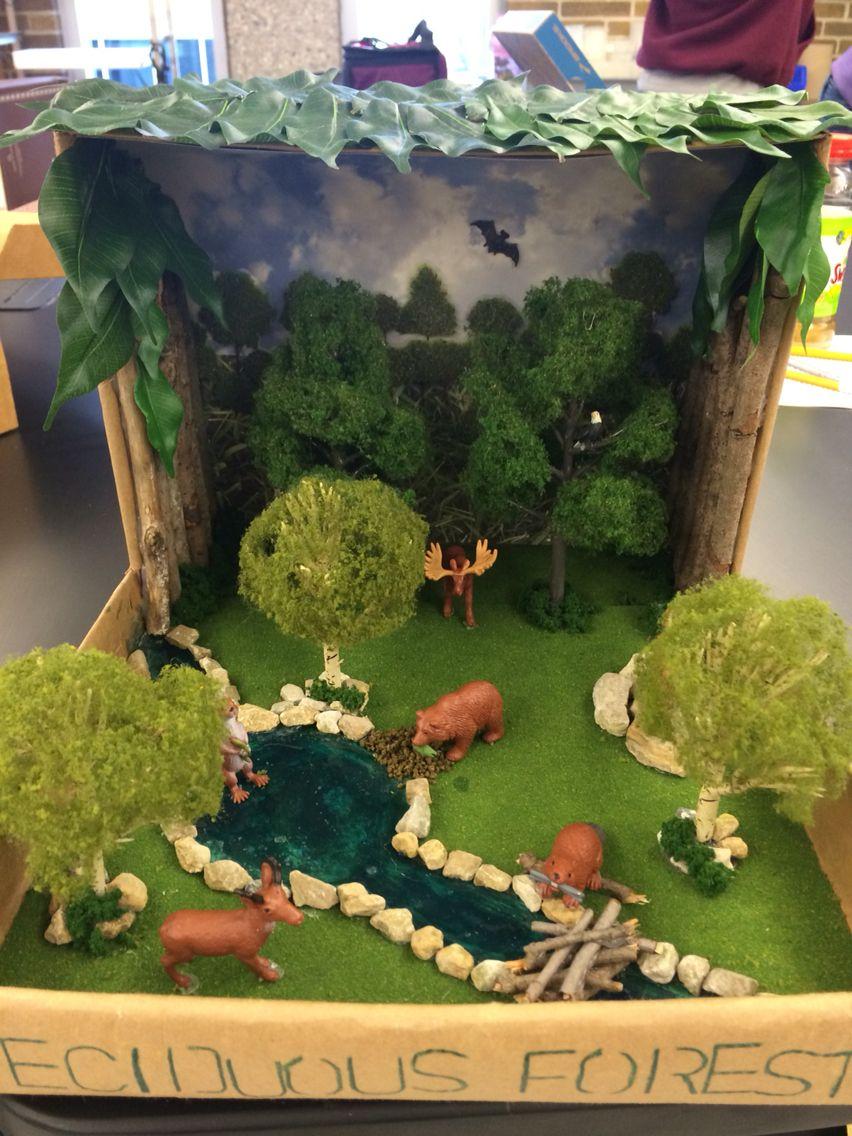 deciduous forest biome teacher crafts pinterest biomes