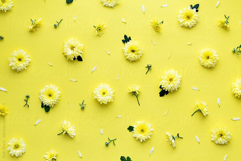 Yellow Flower Background By Ruth Black Flower Background Stocksy United Flower Background Wallpaper Aesthetic Desktop Wallpaper Yellow Flower Wallpaper