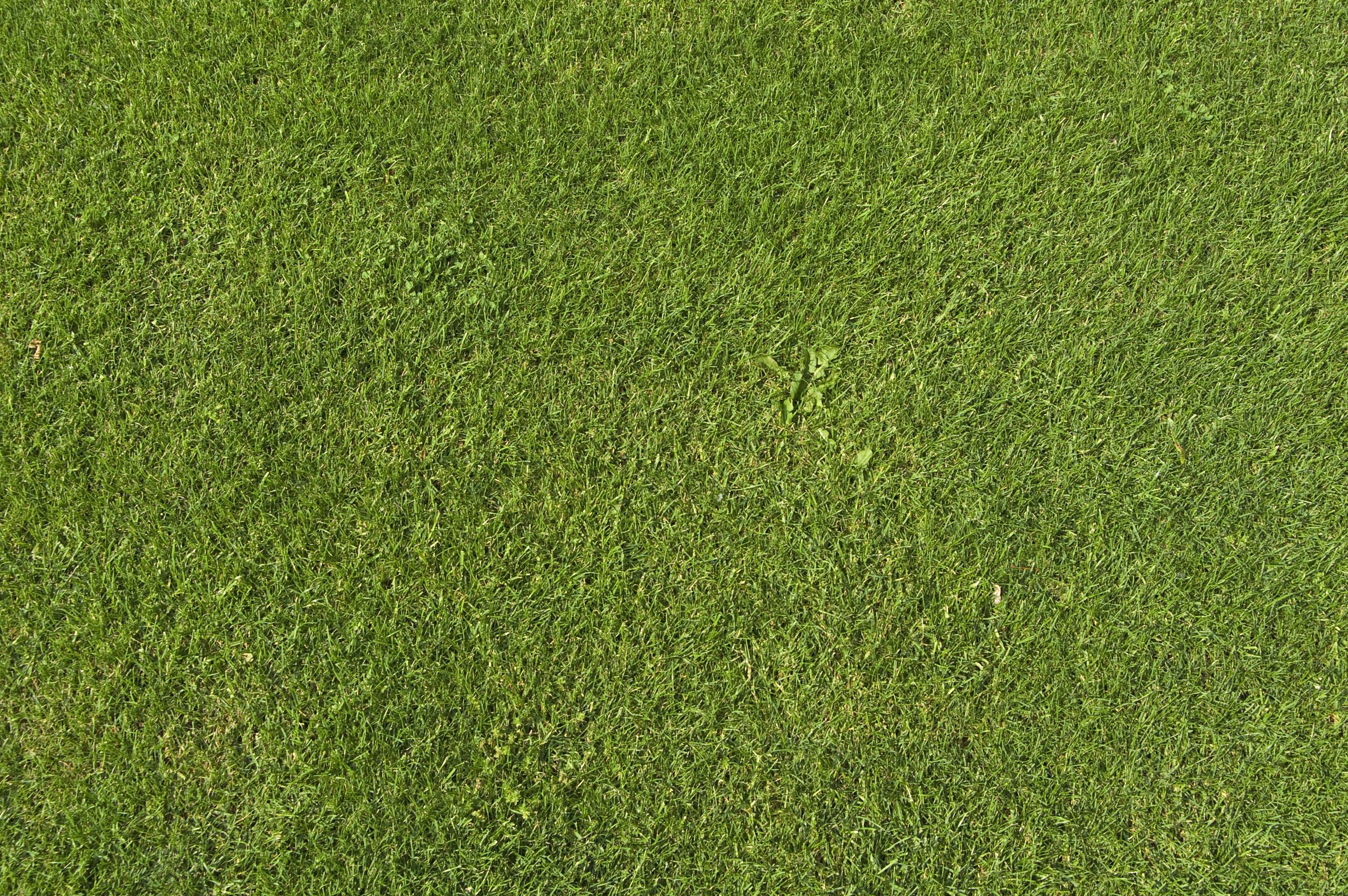 Images of grass concrete new download god pinterest for Large grasses for landscaping