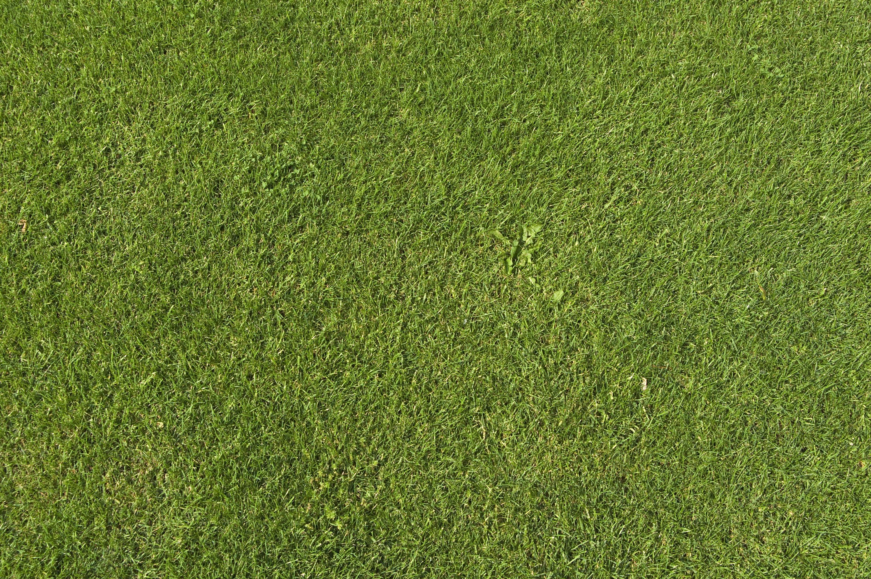 Grass ground texture en yeniler en yiler for Grass landscape