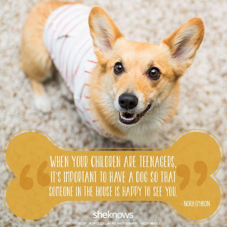 happy dog quotes