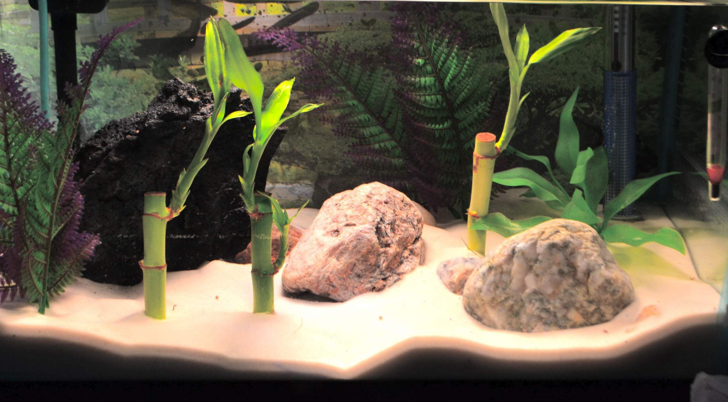 Fish aquarium information - Find This Pin And More On Fish Tank Scenes