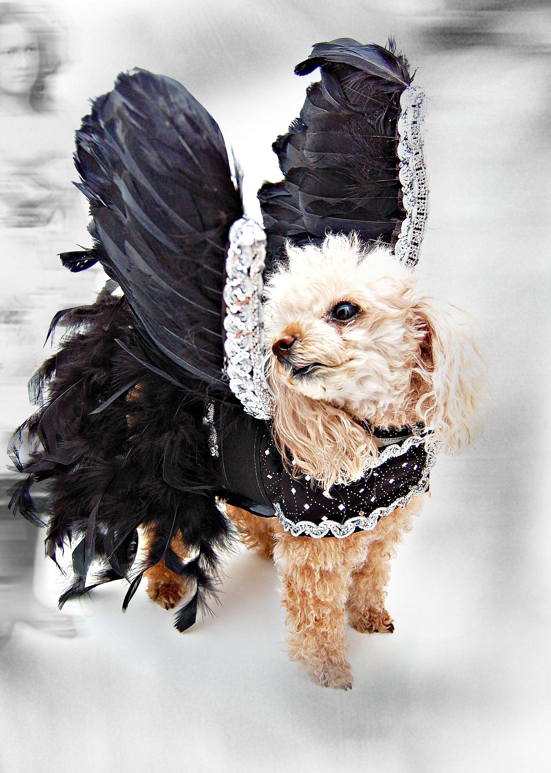 Dog Black Swan Costume By Roberto