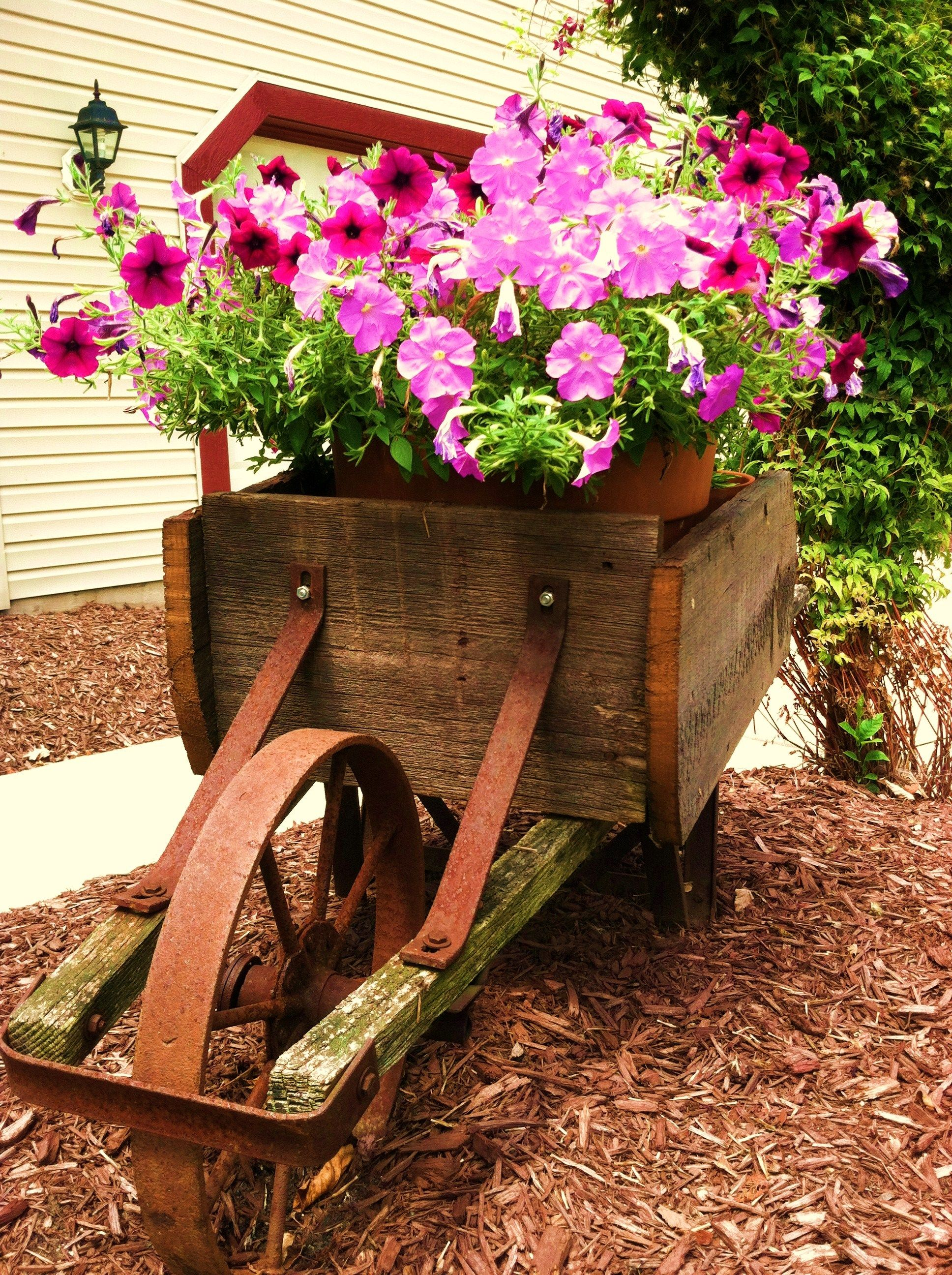 Old vintage wheelbarrow with lots of flowers and nice rusty wheel ...
