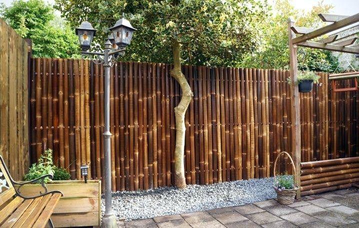 Amazing Bamboo Garden Ideas Backyards New Bamboo Backyard Bamboo