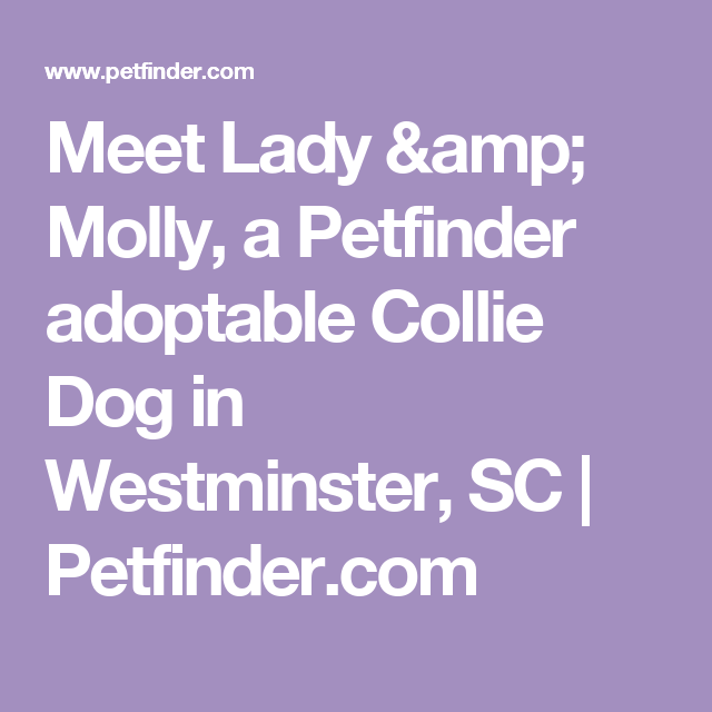 Meet Lady & Molly, a Petfinder adoptable Collie Dog in Westminster, SC | Petfinder.com