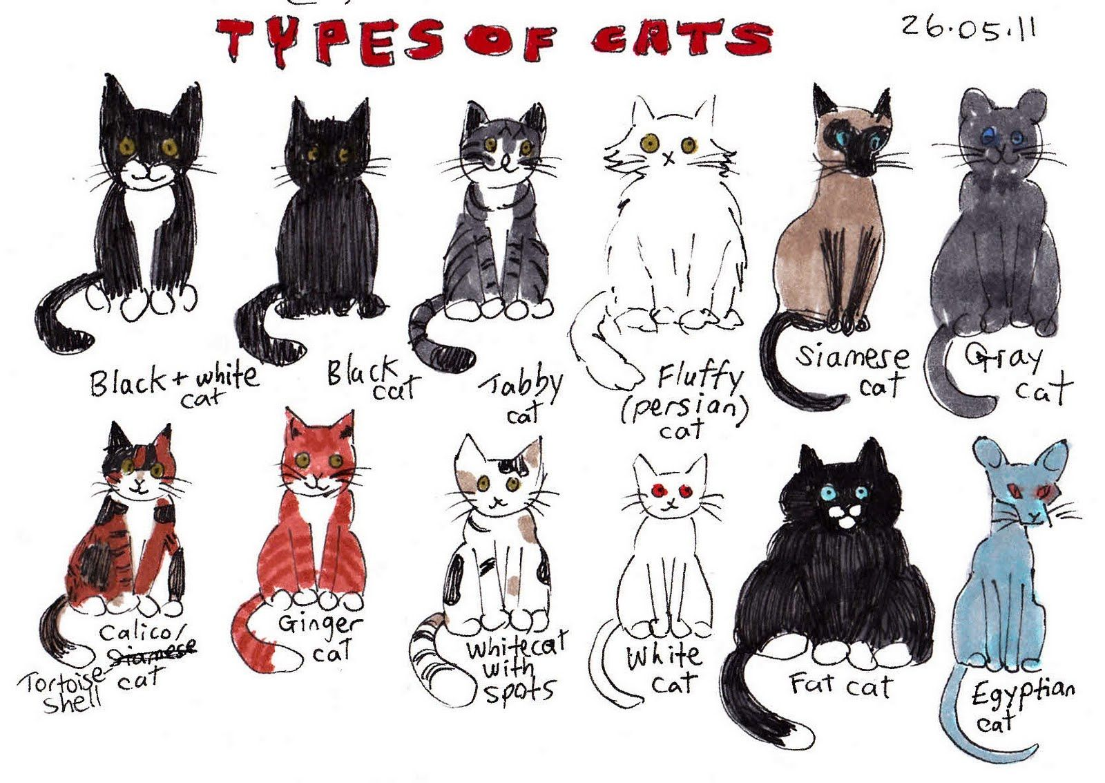 Amusing Breeds Of Cats A Z With Pictures Also Different