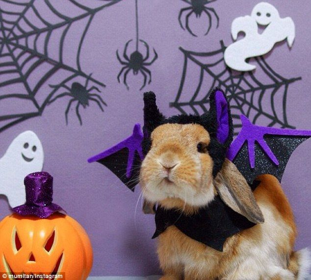 Bat bunny: The bunny's pictures are often flooded with praise from his fans...