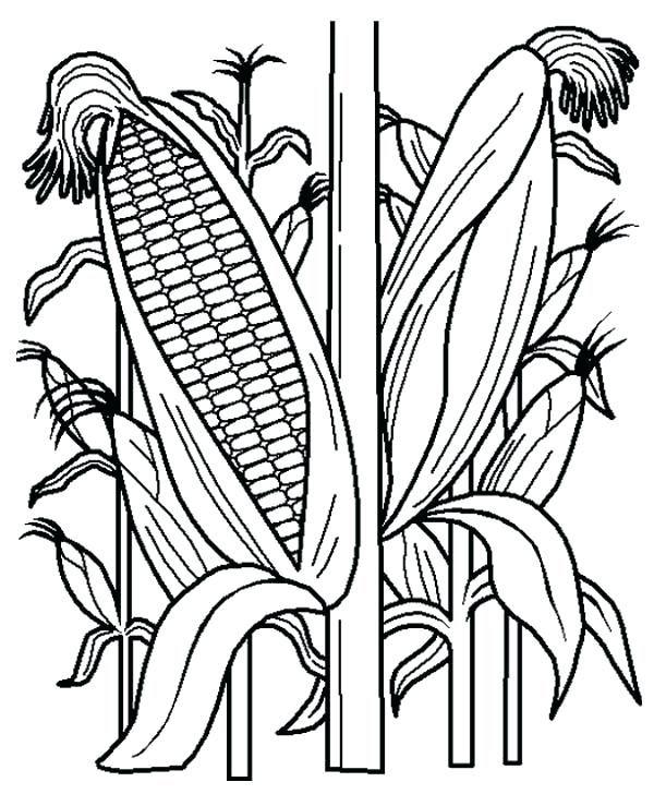 Corn Field Coloring Page Stalk