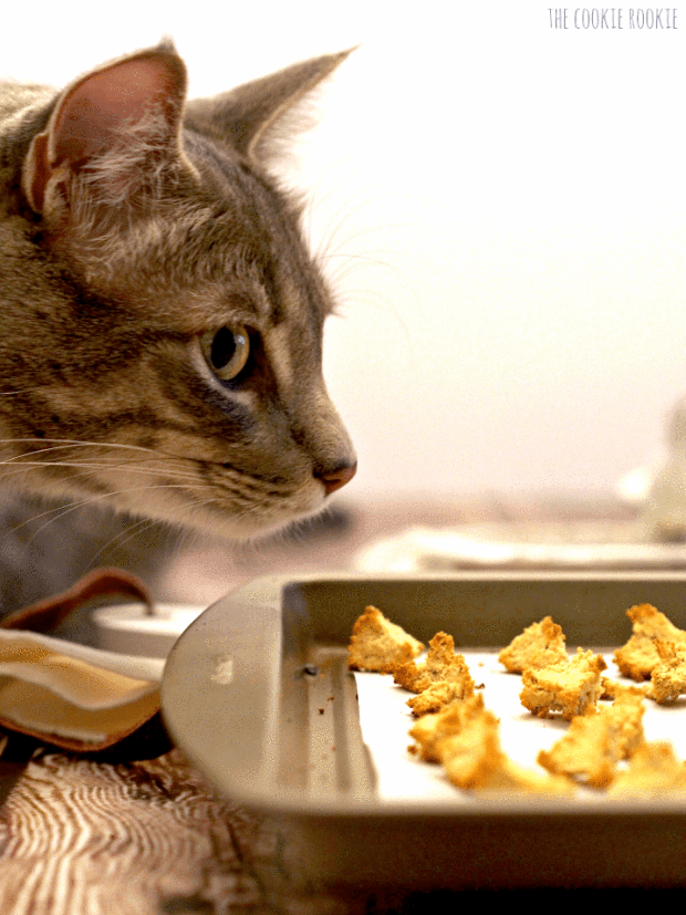 Tuna And Catnip Cat Treat Croutons Cat Snack Recipes Yang Bikin Kucing Bahagia Tepung Kelapa Dan Tuna