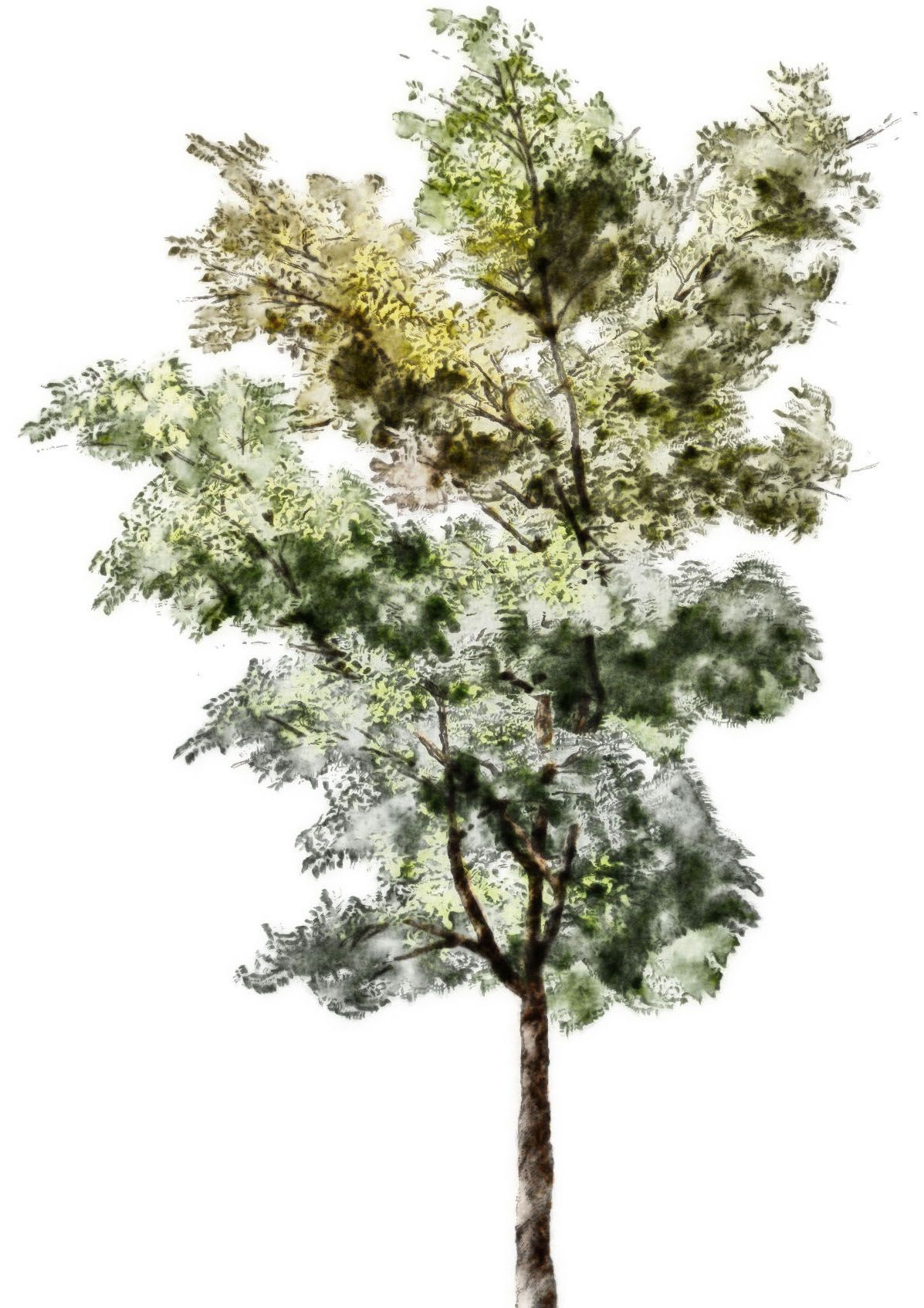 Architecture Drawing Trees watercolor trees - google search | arte | pinterest | watercolor