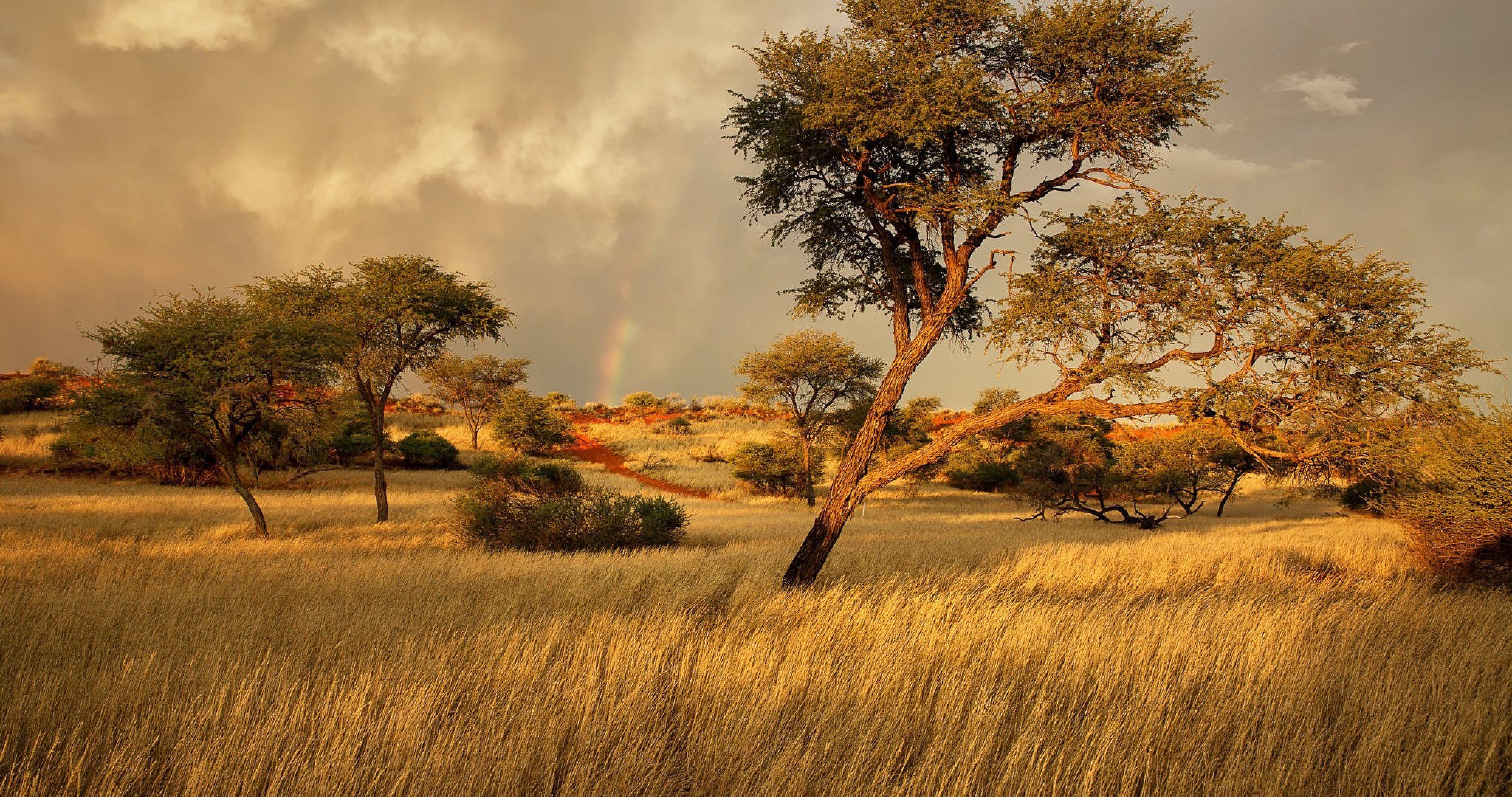 namibia africa savanna 4k ultra hd wallpaper | ololoshenka ...