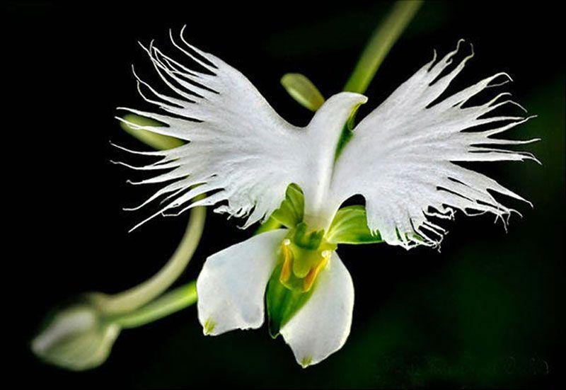 17 Flowers That Look Like Something Else Strange Flowers Unusual Flowers Orchid Seeds
