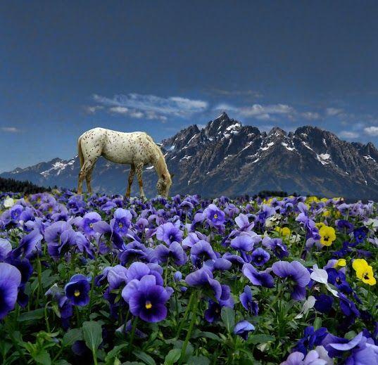 un caballo pinto en un campo de flores lilas