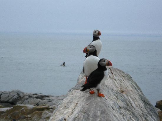 Machias Seal Island Island Trip Advisor Machias