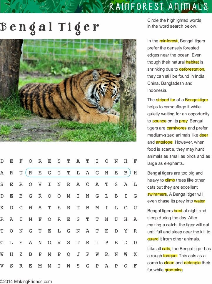 Fact Sheet and Word Search for Bengal Tiger Habitat