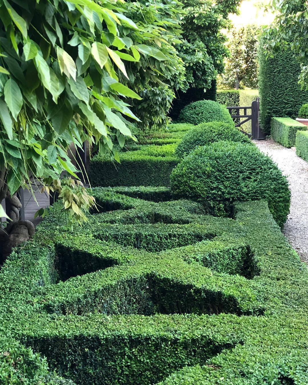 "HEDGE Garden Design & Nursery on Instagram: ""Back on tour ..."