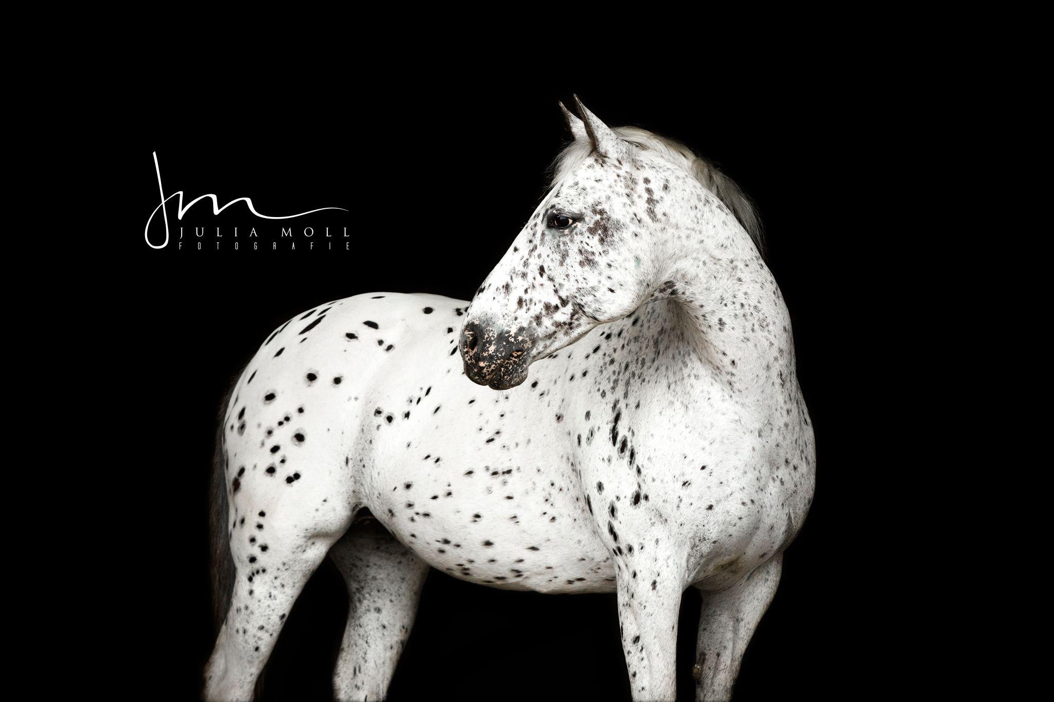 edel Portraits Pferd schwarz Hintergrund Persönlichkeit Gesicht ...