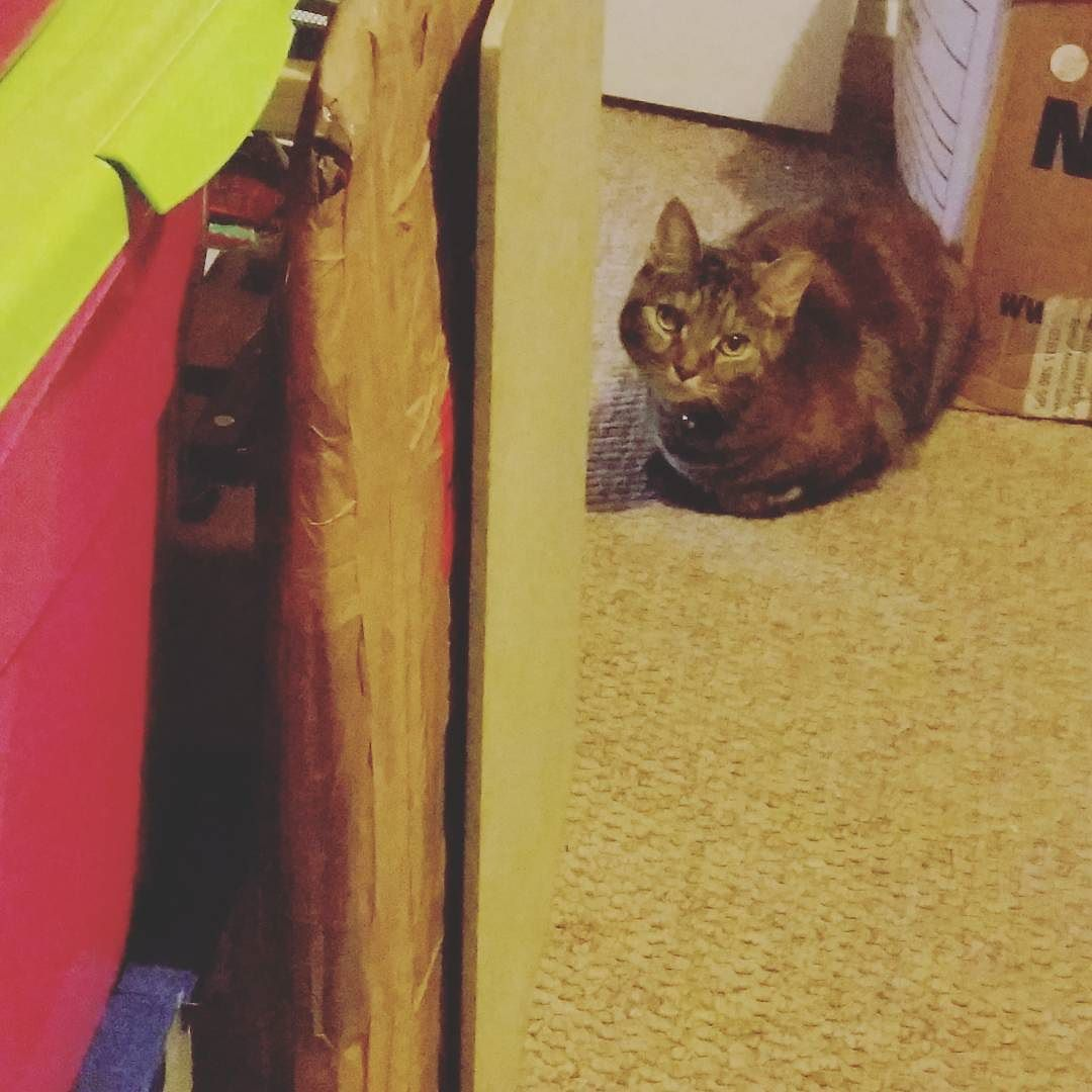 Keeping me company while I sketch out thumbnails for today's drawing  #studio #artists #love #75artstreet #photooftheday #photography #sunday #instaart #art #drawing #illustration #studybuddy #cats #cat #catsofinstagram