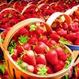 Kebun Strawberry Indonesia