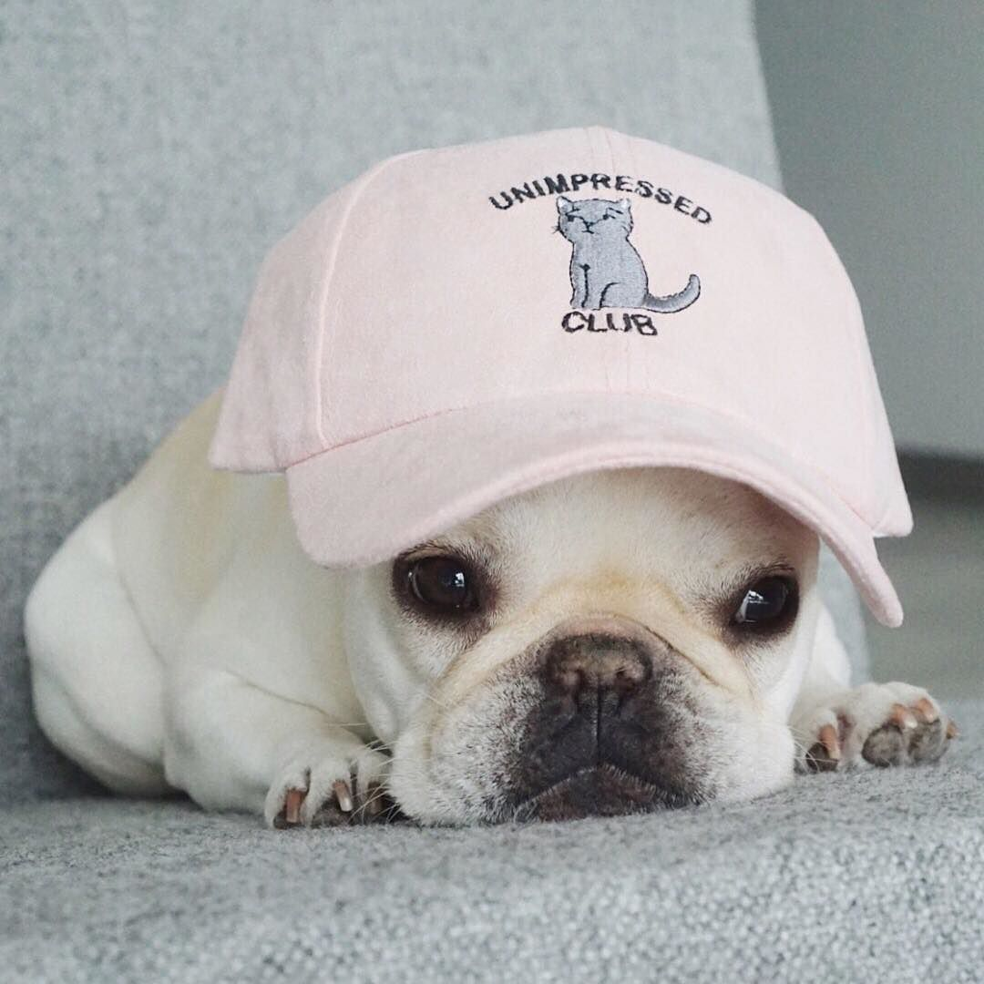 Unimpressed Club Piggyandpolly Shop Link In Bio Cute