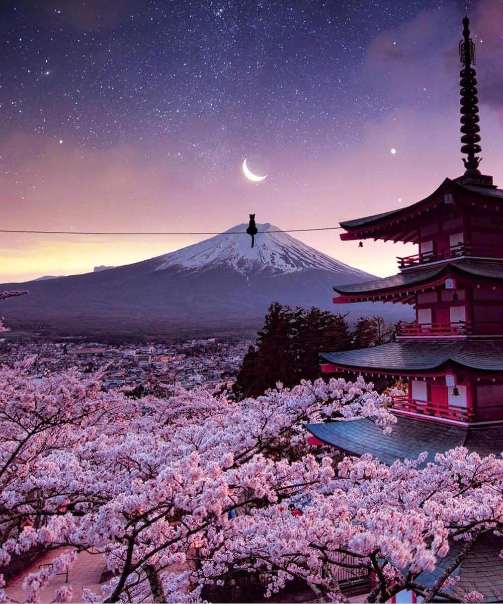 Cherry Blossoms View In Japan Japan Landscape Cherry Blossom Japan Aesthetic Japan