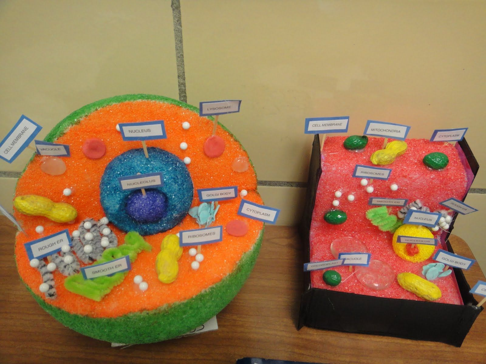Science on Pinterest | Plant Cell Model, Plant Cell and ...