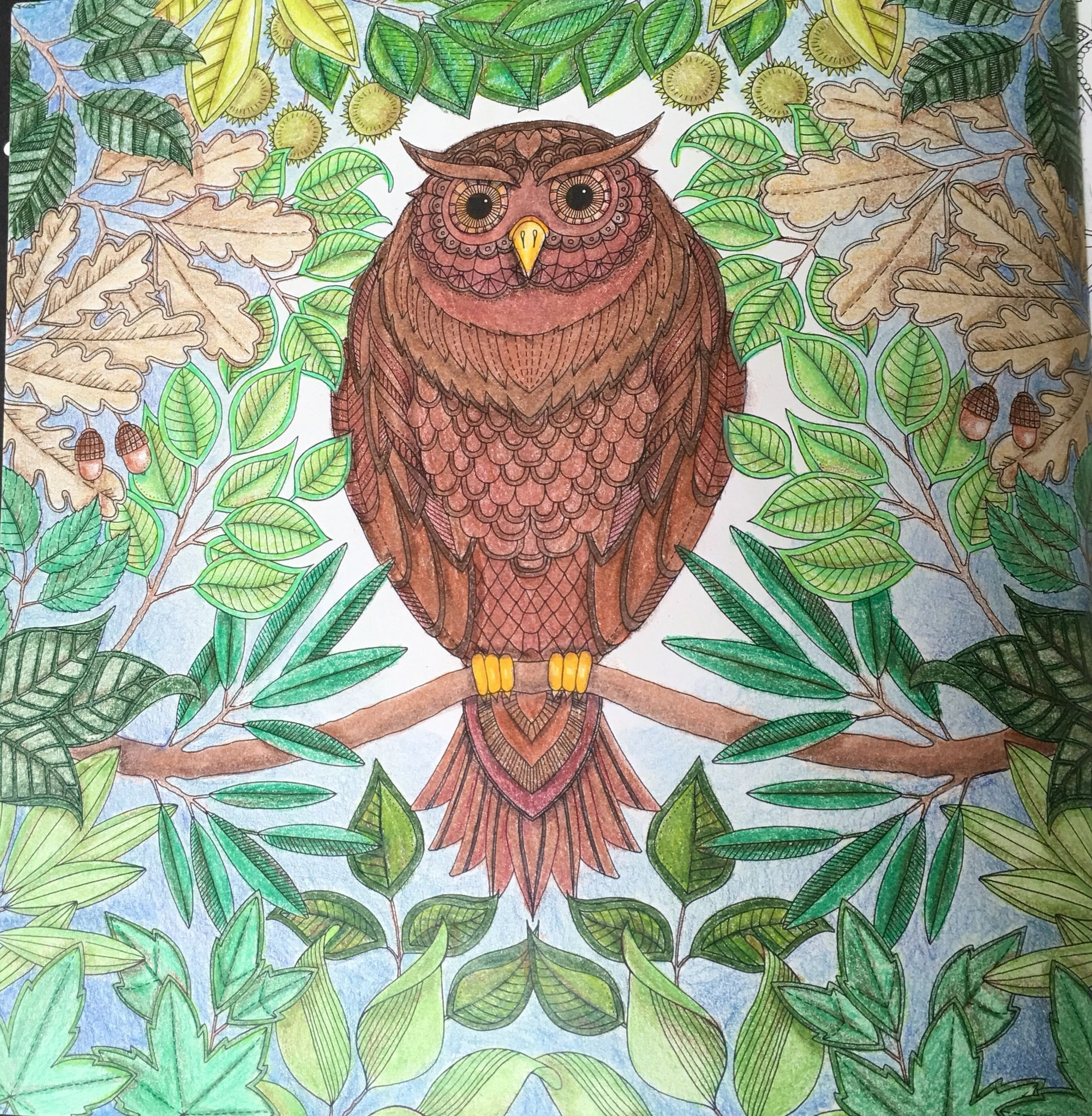 Secret Garden Coloring Book Colored Pencils