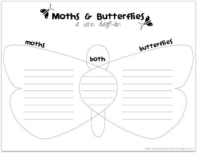 Read About And Record The Similarities And Differences Between Moths