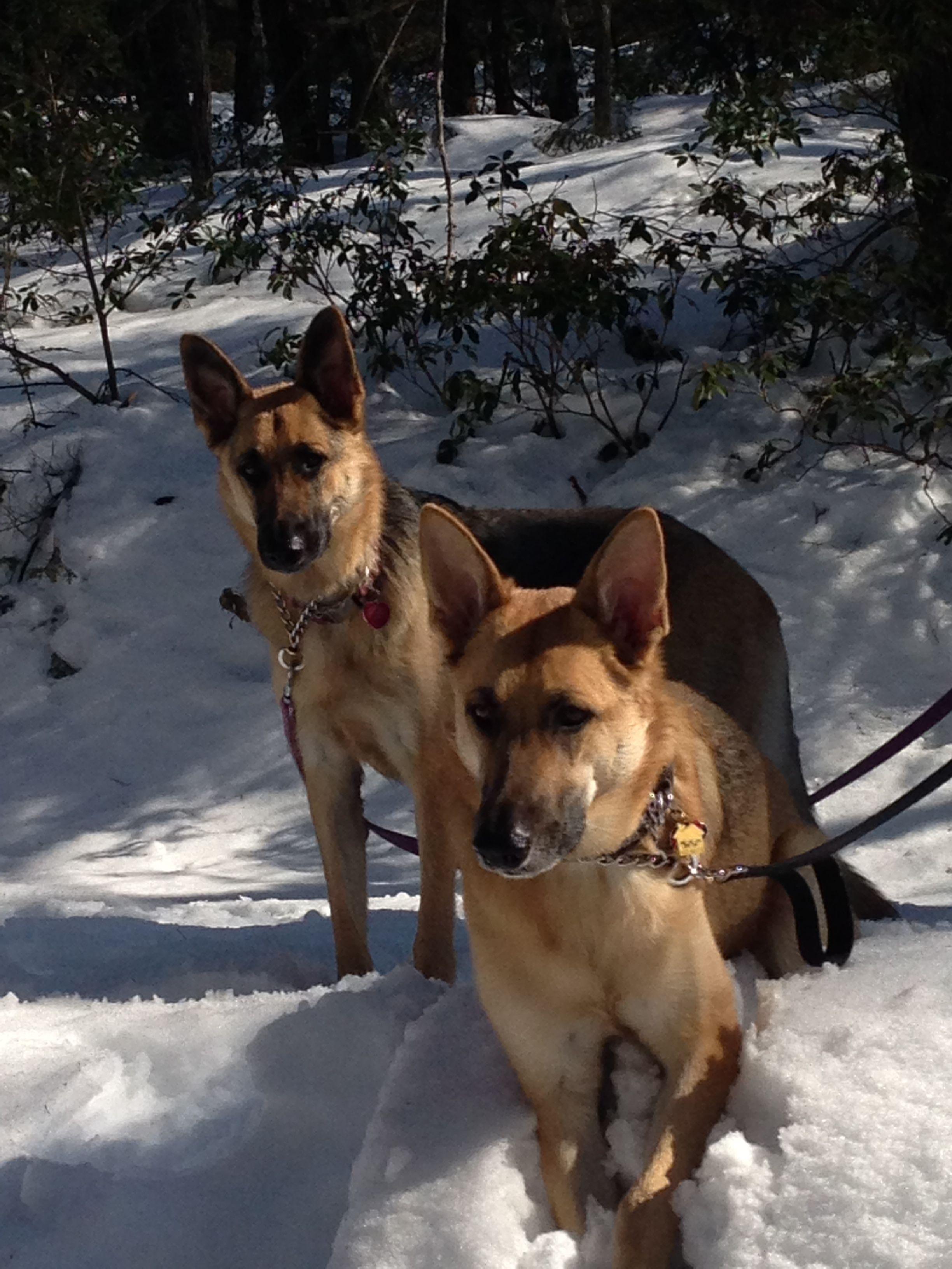 Klaus Tabatha Minnewaska State Park Ny German Shepherd Dogs Dogs Training Your Dog